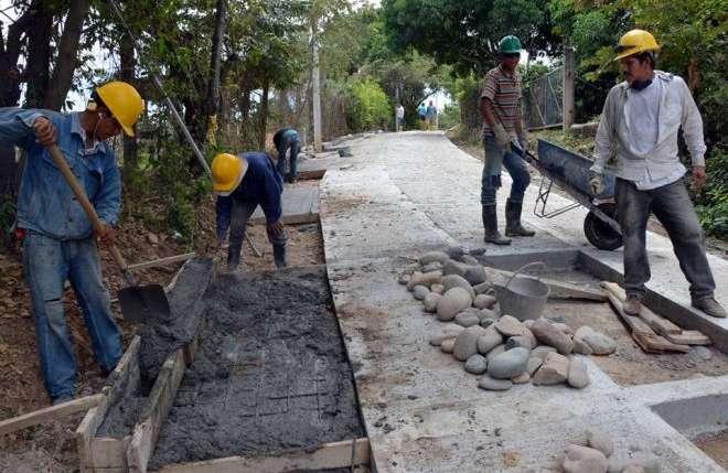 FNC aprobó $45.000 millones para la renovación de los cafetales del país
