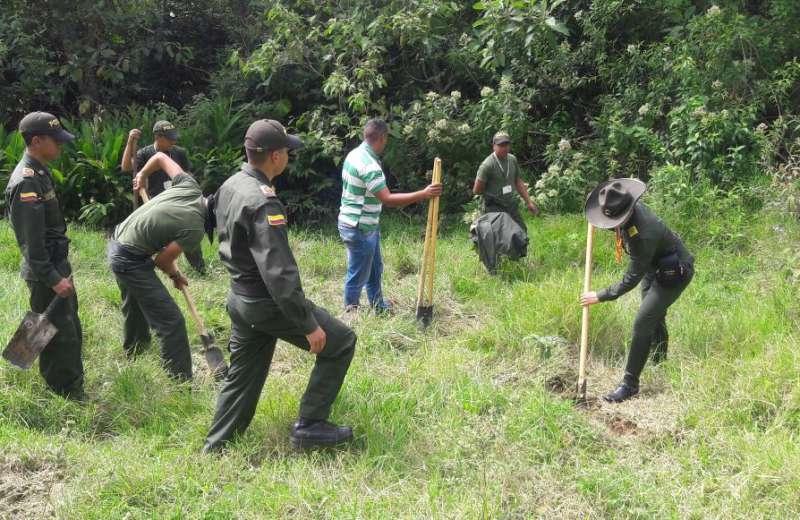 Resiembra de árboles para recuperar humendal en Salento