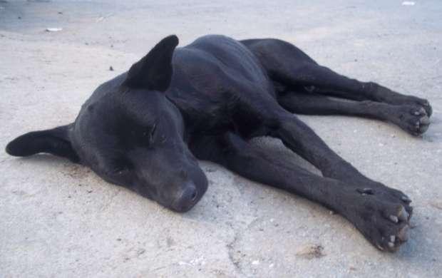 Plantón para pedir esterilización de animales callejeros en Armenia